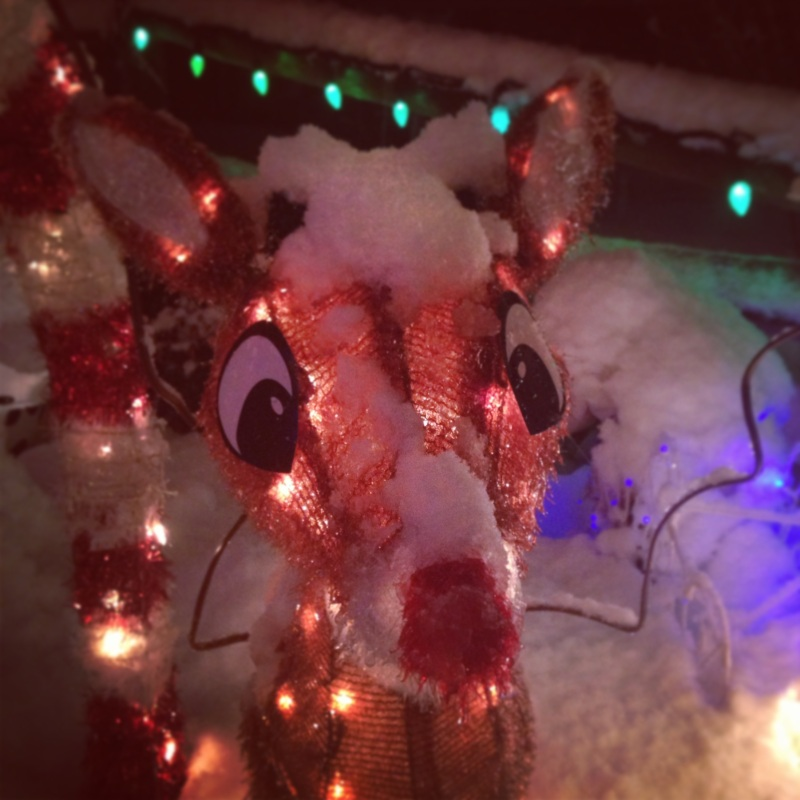 Rudolph! (As seen at our neighbors across the street)