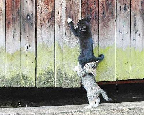 cat-team-work-5591-1268790921-16