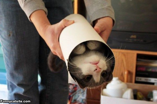 One_Tube_Of_Cat