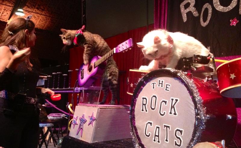 Rock Cats!